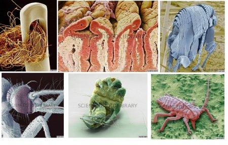تصاویر جالب از میکروسکوپ الکترونی Scanning Electron Microscope---SEM